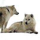 Arctic Wolves by vette