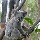 Koala Bear 5 by Gotcha29