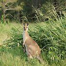 Kangaroo 10 by Gotcha29