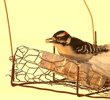 Downy Woodpecker 3 by Kathi Arnell