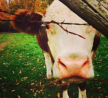 Cow Behind the Fence by Kurtman00