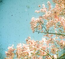 Magnolia Tree by Cassia
