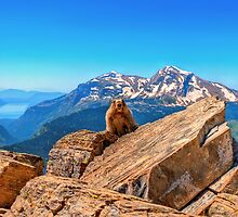 Marmot Domain by JamesA1