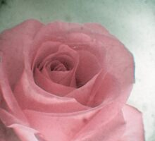 Sweet Rose by Cassia
