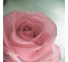 Sweet Rose Photographic Print