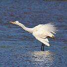 Shake Rattle and Roll Egret by Kym Bradley