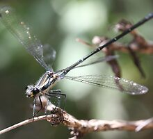 Dragonfly up close  by RickLionheart