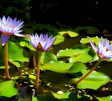 Water Lilies 1 by Dawn Eshelman