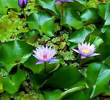 Water Lilies 23 by Dawn Eshelman