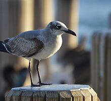 Docked Seagull by WetProductions