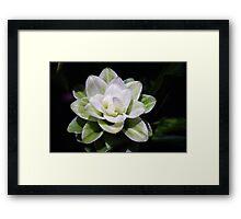 Tumeric flower Framed Print