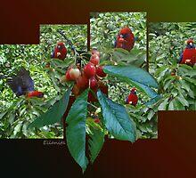 The Cherry Thief by Ellanita