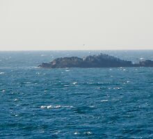 Bird Island by JayCally