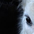 Sweet Cow by Betsy  Seeton