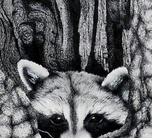Raccoon by Lindsey Winslow