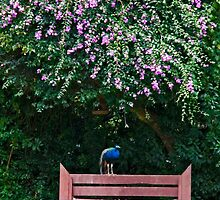Peacock Bench by phil decocco