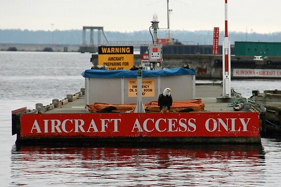 Aircraft Access Only by Laura-Lise Wong