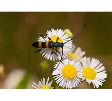 long-horned beetle Photographic Print