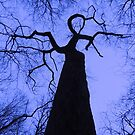 I Looked up to see This Lovely Lady of the Woods by TrendleEllwood