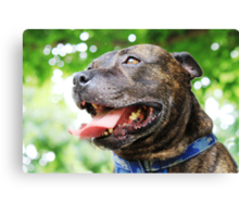 It's a dogs life Canvas Print