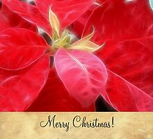Mottled Red Poinsettia 2 Merry Christmas S2F1 by Christopher Johnson