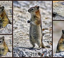Chipmunk Collage by Lynn Bolt