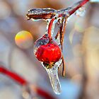 Iced Rosehip by Nancy Barrett