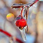 Iced Rosehip by Nancy Barrett