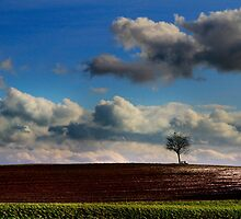 Lonely Tree by Angelika  Vogel