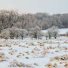 Snowy Field by Nancy Barrett