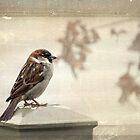 Lone sparrow by Lynn Starner