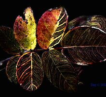 Coppertone Rose Leaf by Dee Carmack