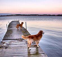Sunset dogs by LadyFi
