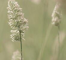 Summer Fields IIII by Jeanne Peters