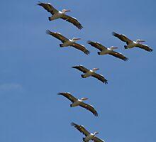 Pelican Squadron by byronbackyard