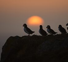 Atlantic puffins by dgwildlife