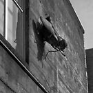 Just a Fly on The Wall by Lee LaFontaine