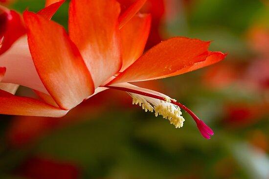 Ephemeral Bloom by Lynn Gedeon