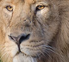 Lions Eye by Darren Wilkes