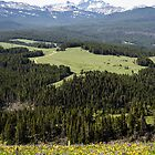 Bighorn Mountain Meadows by westernphoto