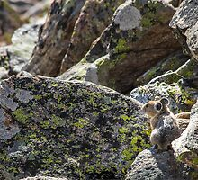 Alone on the Rocks by westernphoto