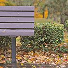 park bench by ericreising