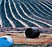 harvest by NordicBlackbird