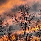 December Sunset by Sherri Fink