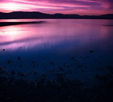 Purple Haze by Shaun Groenesteyn