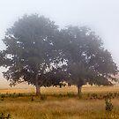 Mornings Mist by WendyJC