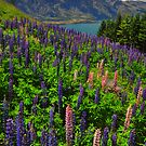 100% Pure Queenstown by S T