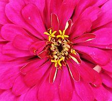 Muthal Flower 2 by AroundOurWorld