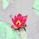 Botanical art, art style pretty pink waterlily flower by naturematters