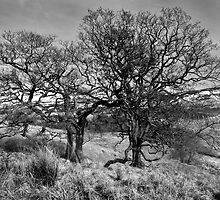 Arran Trees Ross Road by DavidWedge